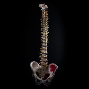 spine model 360 Product Photography thumb